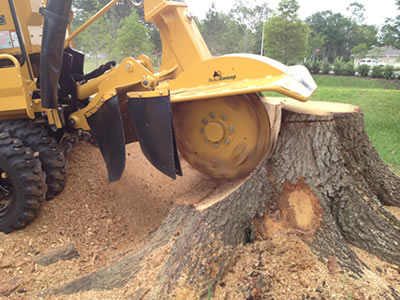 Treelopping & Stump Removal