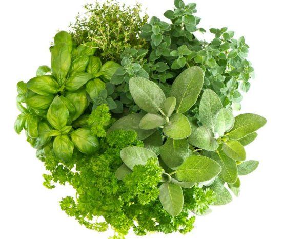 Herbs 4 U