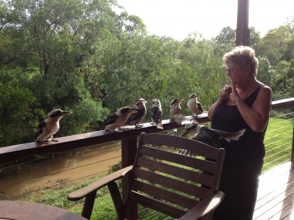 Feeding the kookaburras
